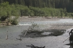 Hoh River with Forest